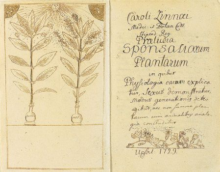 Photo of a page from Linneus' 1729 manuscript depicting pollinating plants.