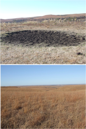 Top image: A closely cropped grassland with a large mud wallow in the center, and tall prairie forbs growing around it. Bottom: An autumn grassland with tall brown grass.