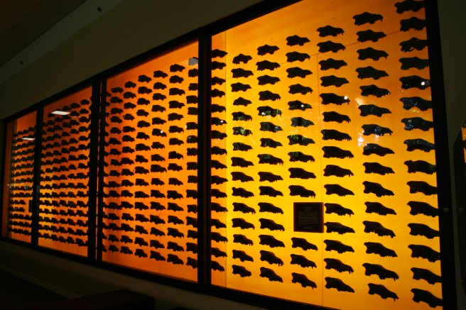 The famous wall of dire wolf skulls represents only a fraction of the specimens in the museum. Photo by Pyry Matikainen.