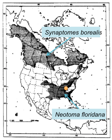A range map modified from Graham et al., 2005. The orange dot is the location of the fossil localities that show that the northern bog lemming (top) and eastern woodrat (bottom) coexisted.