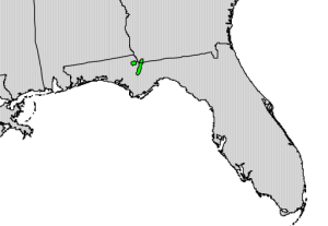 It's been suggested that Torreya may have been dispersed by a now-extinct giant tortoise that roamed the southeast until the end-Pleistocene extinctions. The Torreya Guardians have been enlisting managed relocation to help the species make it to more favorable habitats.